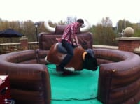 Standard Rodeo Bull